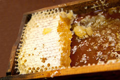 Honeycomb with honey and wax Royalty Free Stock Photo