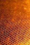 Honeycomb with honey and wax Stock Photo