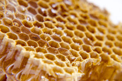 Honeycomb with honey on white background Stock Image