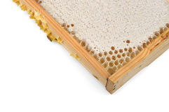 Honeycomb with honey in a wooden frame Royalty Free Stock Images