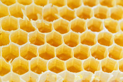 Honeycomb isolated on white Royalty Free Stock Photo
