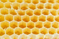 Honeycomb isolated on white Royalty Free Stock Photo