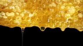 Honeycomb kapie miodowego zbliżenie strzał zbiory