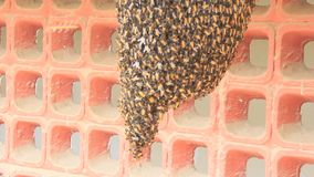 Honeycomb and live honey bee stock footage
