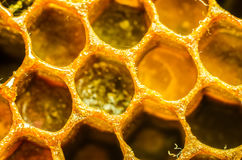 Honeycomb macro Stock Images