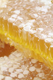 Honeycomb with macro images. Stock Photos