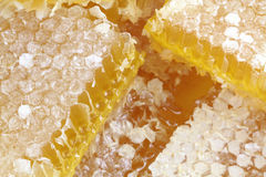 Honeycomb with macro images. Royalty Free Stock Images