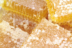 Honeycomb with macro images. Stock Photo
