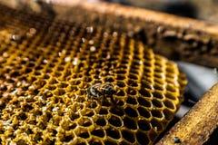 honeycomb macro royalty free stock photo