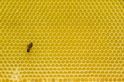 Honeycomb pattern with bee Stock Photo