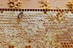Honeycomb with working bee. Golden background. Honeycomb pattern, hexagonal texture. Abstract pattern background with honeycomb in golden colors stock image