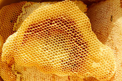 Honeycomb pieces in bright sunlight Royalty Free Stock Images