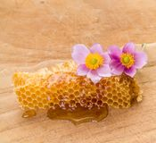 Honeycomb and pink flowers Stock Photo