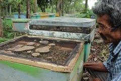 Honeycomb pszczoła Zdjęcia Royalty Free