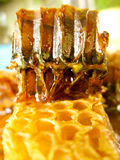 Honeycomb scene Royalty Free Stock Images
