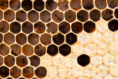 Honeycomb with sweet honey Royalty Free Stock Images