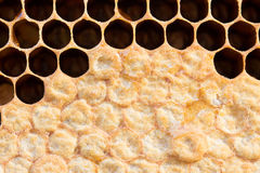 Honeycomb with sweet honey Royalty Free Stock Image
