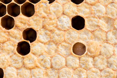 Honeycomb with sweet honey Stock Images