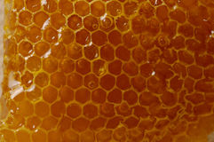 Honeycomb Texture Royalty Free Stock Photo