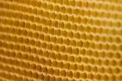Honeycomb texture royalty free stock photos
