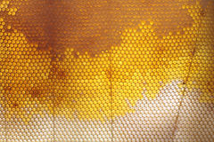 Honeycomb texture. This is a frame about a honeycomb made by bees with an unbelievable architectural precision. The photo was taken from a honey harvest event in Stock Photography