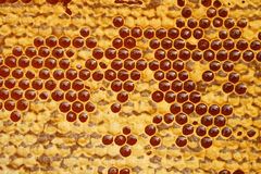 Honeycomb texture with honey Stock Photography