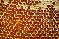 Honeycomb texture with honey Royalty Free Stock Images