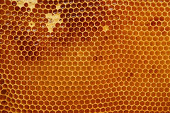 Honeycomb texture with honey Royalty Free Stock Image