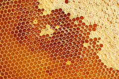 Honeycomb texture with honey Royalty Free Stock Photography