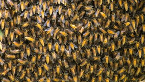 Honeycomb time lapse. Honeycomb on the tree time lapse stock footage