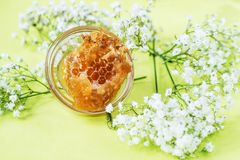 Honeycomb with tiny white flowers on green background Royalty Free Stock Photos
