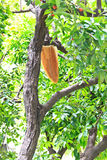 Honeycomb on the tree. Royalty Free Stock Image