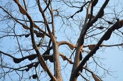 Honeycomb on a tree,Thailand Stock Photos