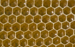 Honeycomb - a unique creation of honeybees. Royalty Free Stock Photo