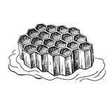 Honeycomb vector drawing. Hand drawn honey illustration. Royalty Free Stock Photos