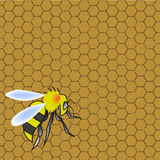 Honeycomb and wasp Stock Images