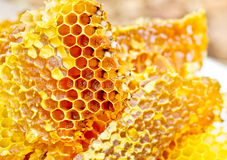 Honeycomb Wax Stock Photo