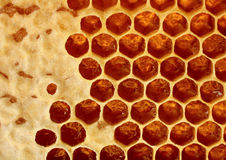 Honeycomb wax Royalty Free Stock Photography