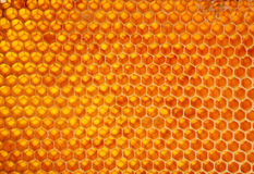 Honeycomb wax cell Stock Photos