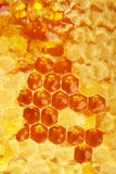 Honeycomb wax cell Stock Images