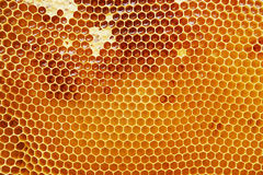 Honeycomb With Honey Royalty Free Stock Photos