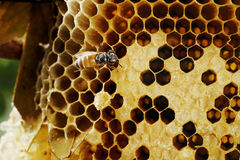 Honeycomb on wood Royalty Free Stock Photography