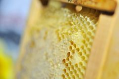 Honeycomb in the wooden frame Royalty Free Stock Photos