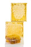 Honeycomb in the wooden frame. On the white backrgound Stock Image