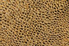 Honeycomb worm holes Royalty Free Stock Photo