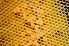Honeycomb wzór z miodowymi formami Obraz Stock