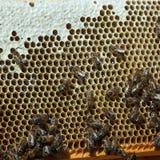 Honeycomb z pszczołami Obrazy Stock