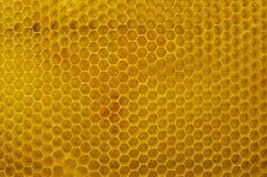 Honeycomb zakończenie makro- tła zamknięty honeycomb wizerunek zamknięty Obraz Stock