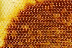 Honeycomb2 stockbild