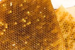 Honeycombs Royalty Free Stock Photos